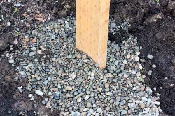 pea gravel around a raspberry support post