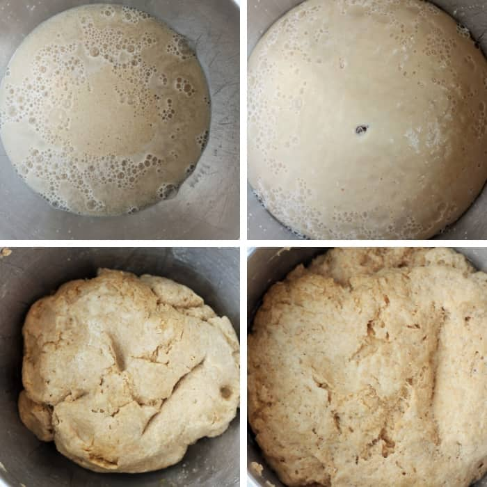four photos of dough rising in steps for whole wheat hamburger buns