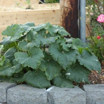 Garden debrief