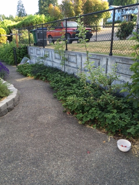 Strawberries for a small garden space