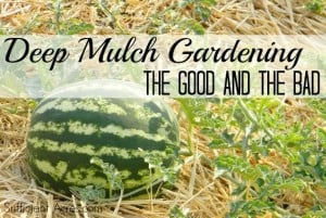 mulch-the-good-and-the-bad