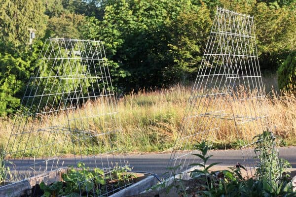 cattle panel garden trellis in raised bed gardens | sustainablecooks.com