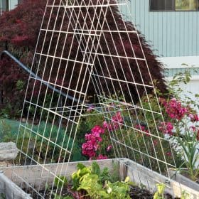 cattle panel garden trellis in a raised bed | sustainablecooks.com