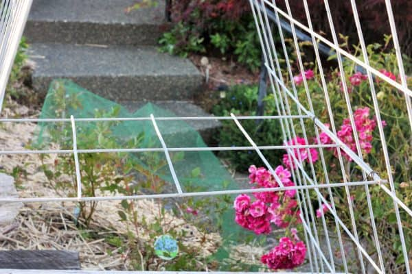 DIY garden trellis in a planting box | sustainablecooks.com