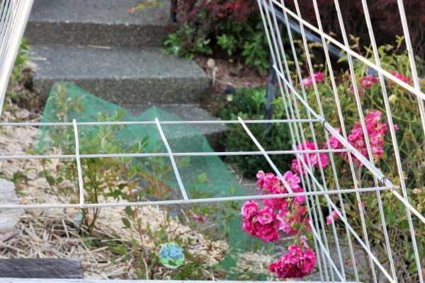 DIY garden trellis in a planting box