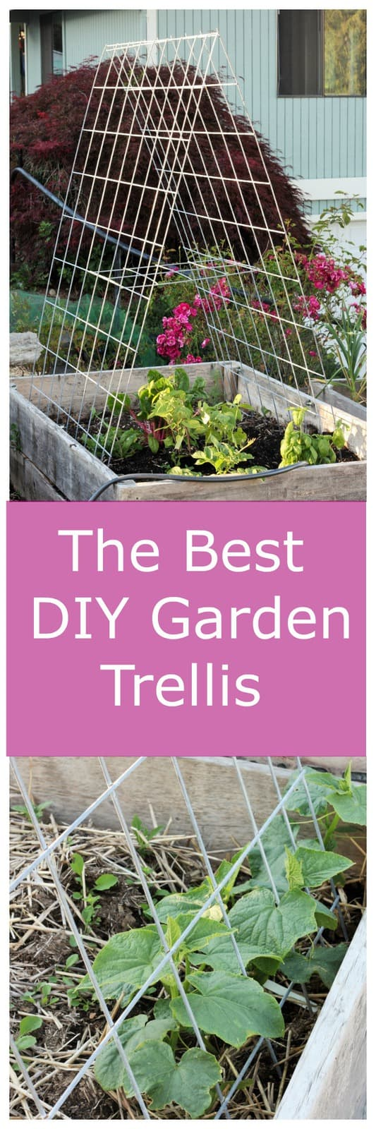 Learn how easy it is to build a DIY garden trellis for your fruit, vegetable, or flower garden. Simple cattle panels create strong and long-lasting garden trellises that you can use year after year.