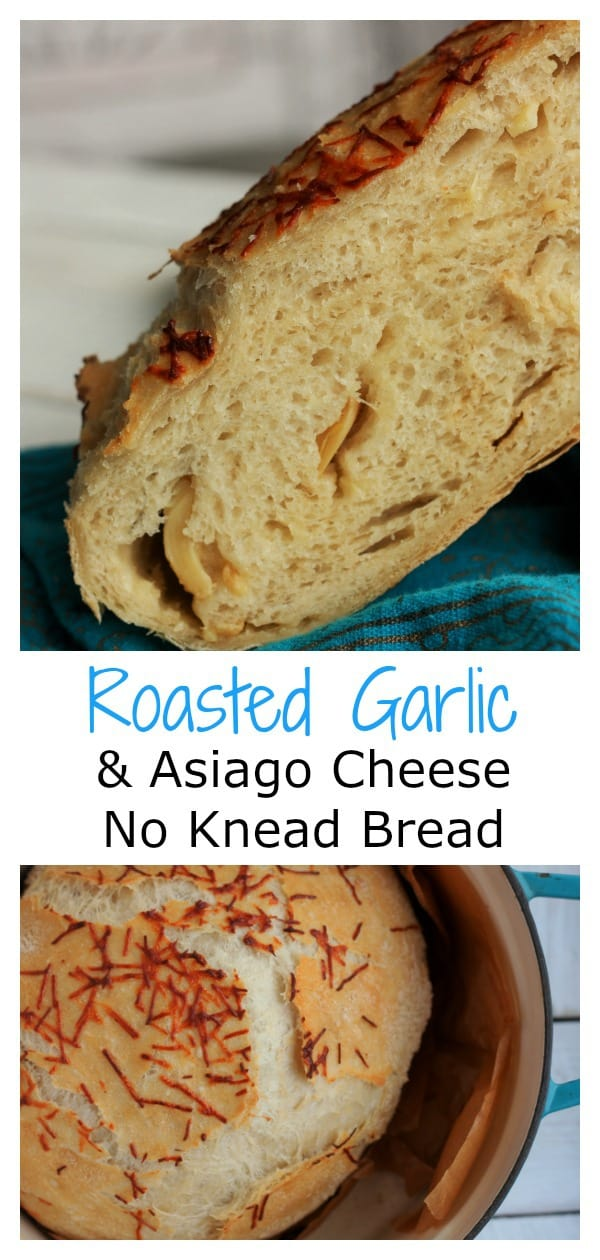Roasted Garlic and Asiago Cheese No Knead Bread is the perfect easy bread for new bakers. No Knead Bread has a short ingredients list and requires only a few baking tools.