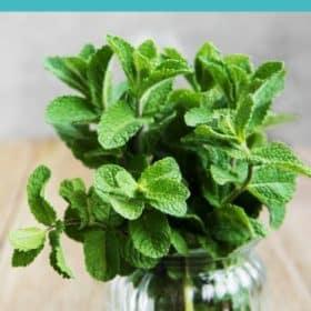 a jar of fresh mint