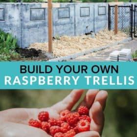 raspberry trellises