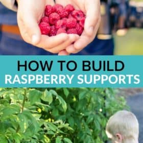a child in front of raspberry plants