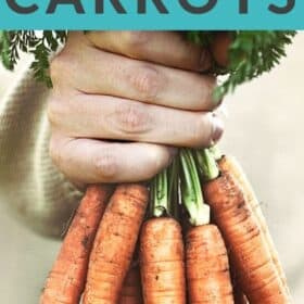 a hand holding a bunch of fresh carrots