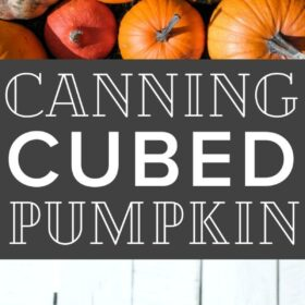 cubes of canned pumpkin