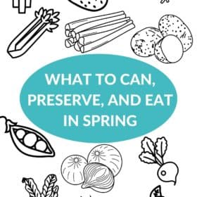 Illustrations of springtime produce