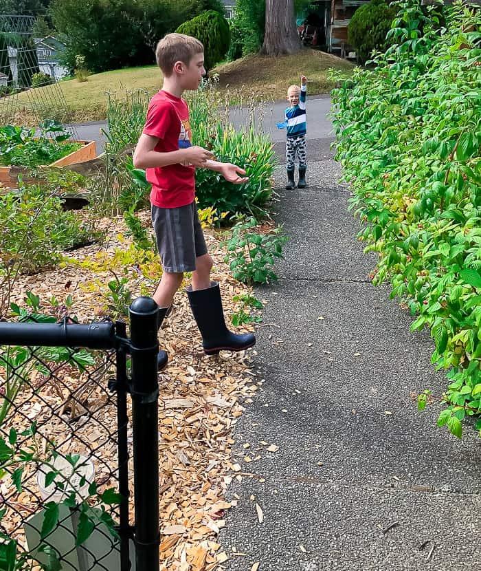 2 kids picking berries