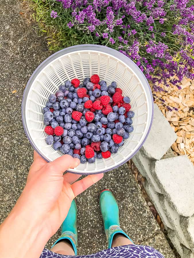 a bowl of berries