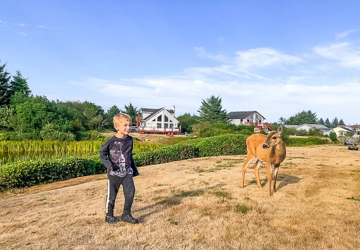 a boy standing next to a deer in the grass