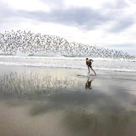a boy on a skim board with birds behind him