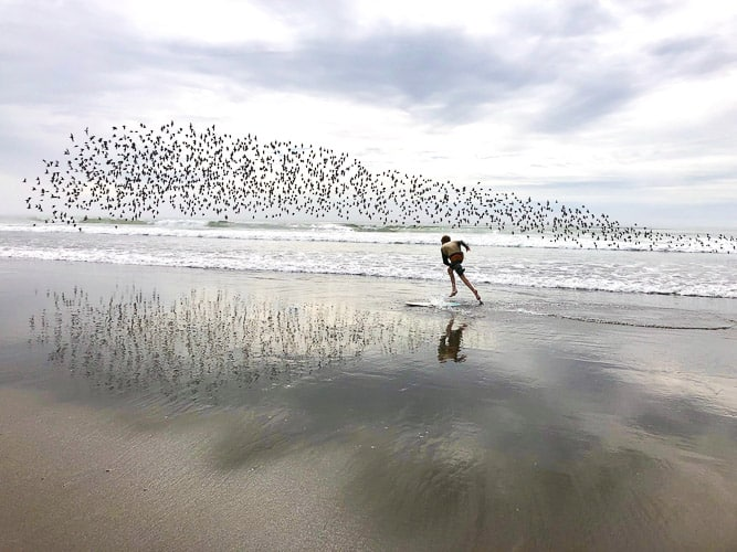 a boy on a skim board with birds behind him