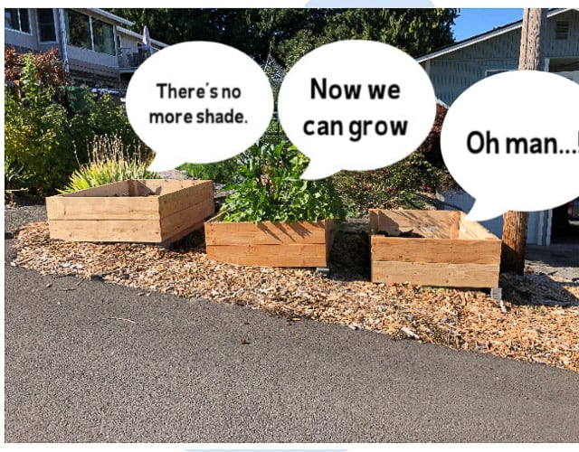 3 garden boxes with silly thought bubbles over there