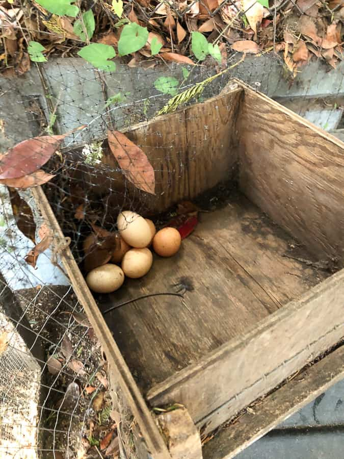 eggs in a wooden box