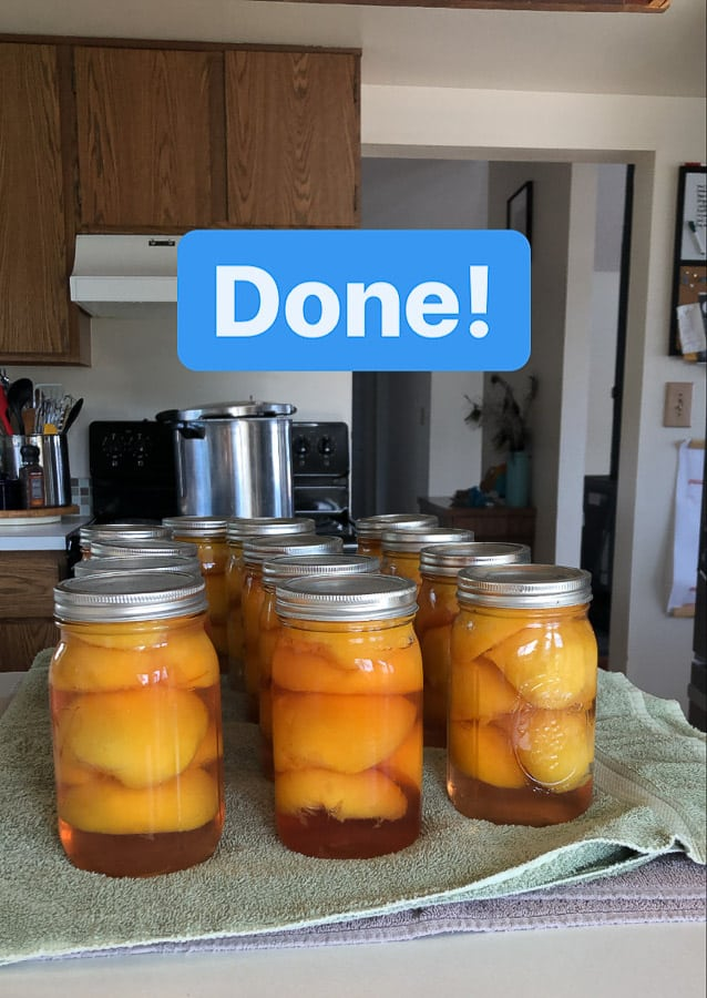 jars of canned peaches on a kitchen counter