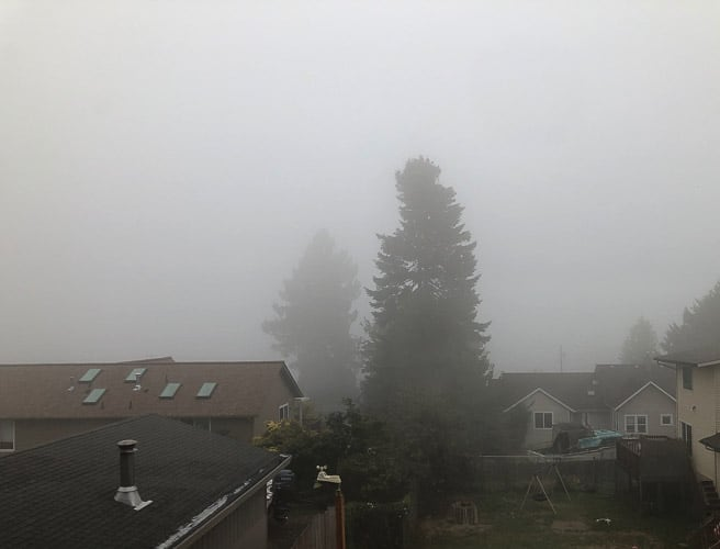 smoke covering trees