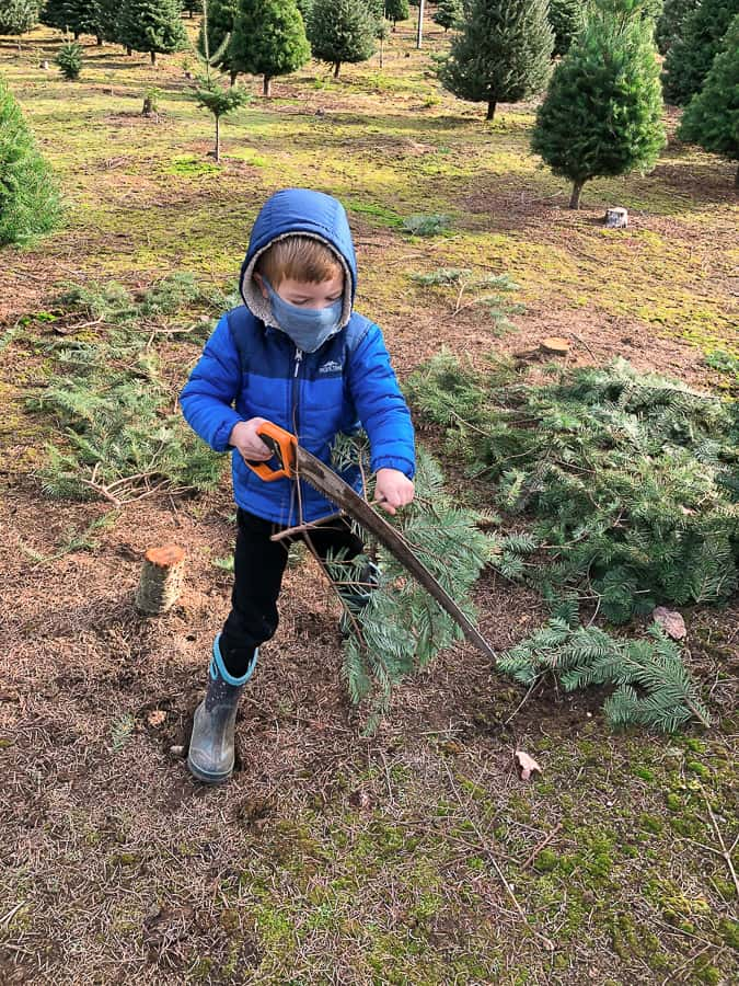 a boy with a saw and a tree branch
