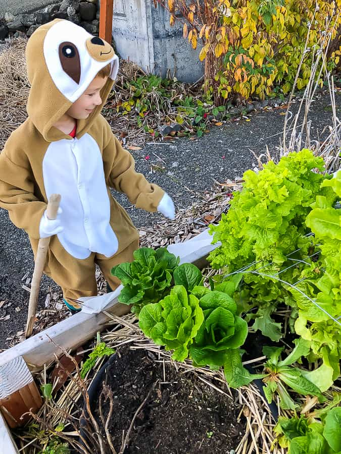 a boy in a sloth costume picking lettuce