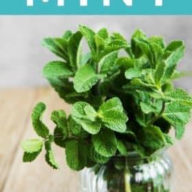 a vase on fresh mint