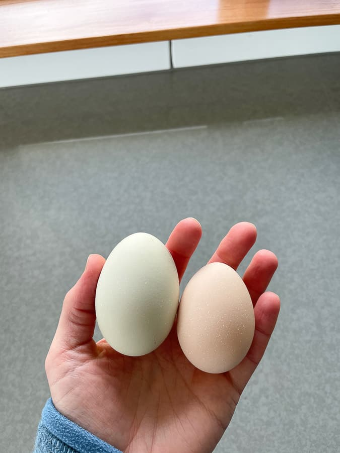 a hand holding 2 eggs