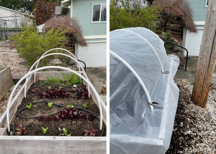 2 photos showing a raised bed garden