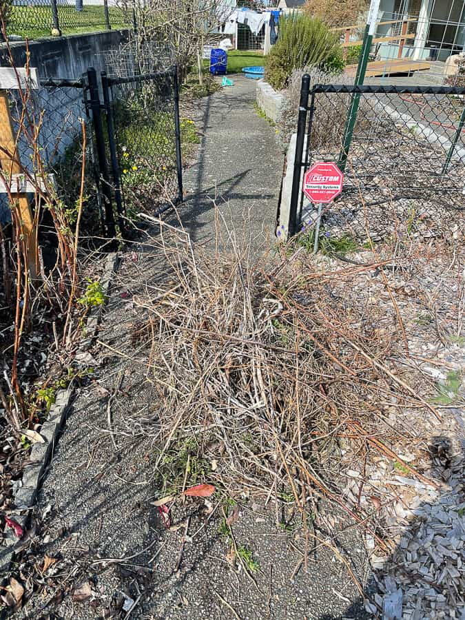 piles of dead garden growth on cement
