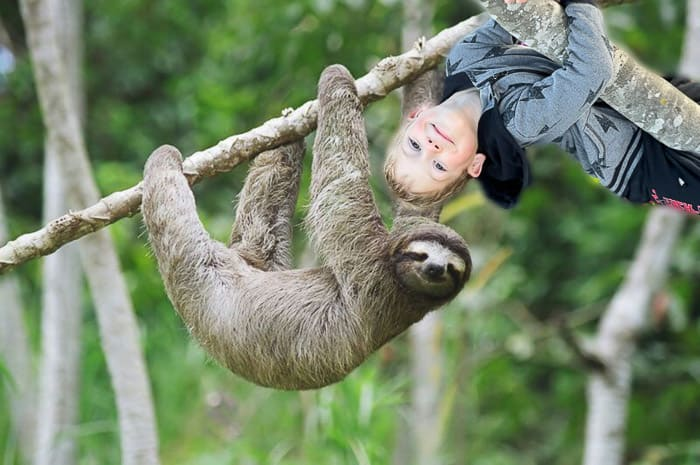 a sloth on a tree and a little boy on a tree acting like a sloth