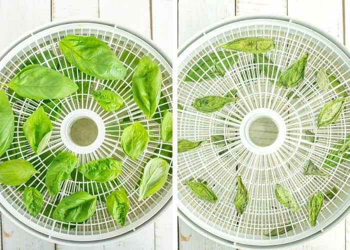 2 photos of a dehydrator tray drying basil