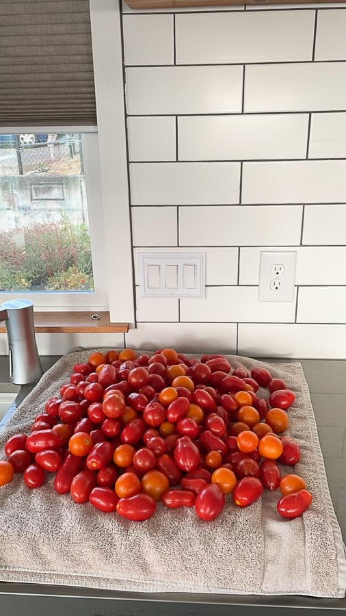 tomatoes on a towel
