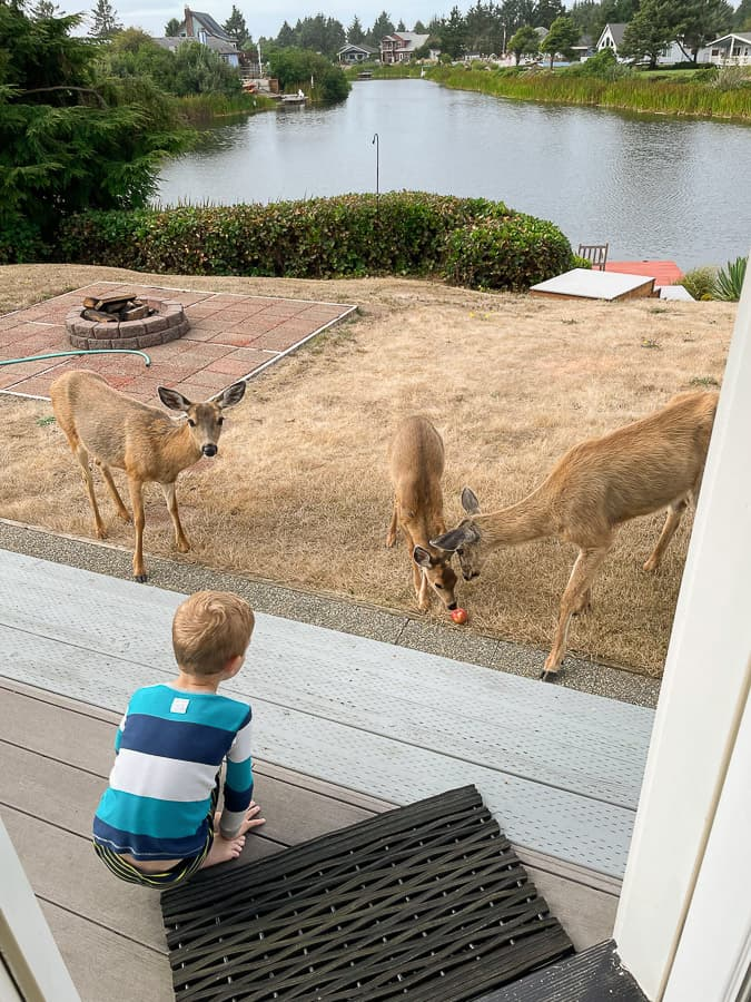 a boy in PJs with 3 deer on a lawn